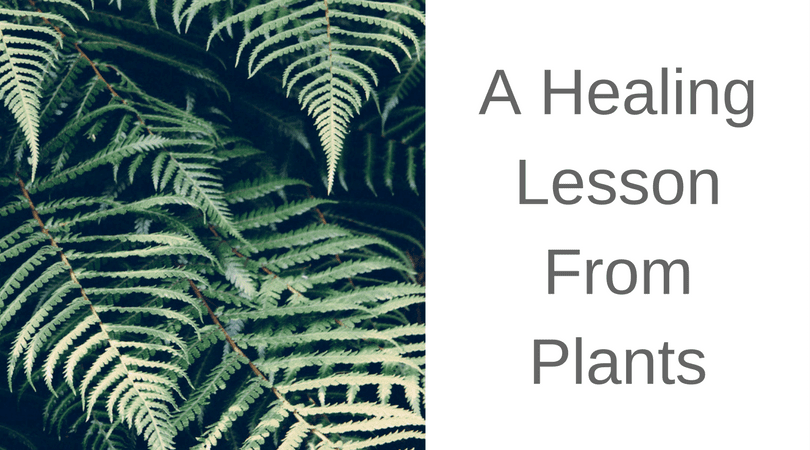 What Can We Learn From Our Plants?