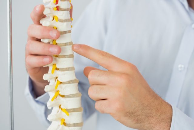 chiropractor holding model of spine
